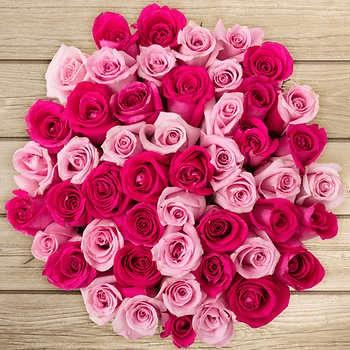 valentines-pink-roses