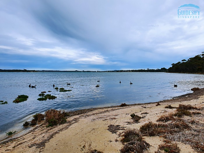 American River Kangaroo Island