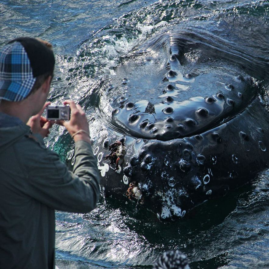 A photographer snaps a whale in Iceland.