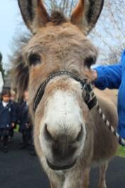 Daisy the Donkey1