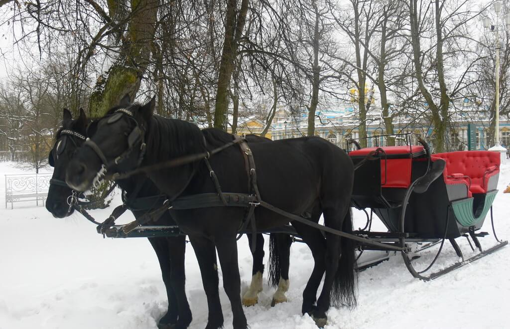 Horse-Drawn Carriage And Sleigh Rides In Tsarskoe Selo