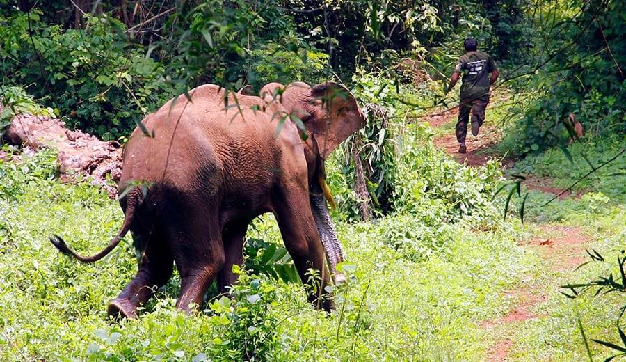 Kodanad Elephant Training Centre and Sanctuary