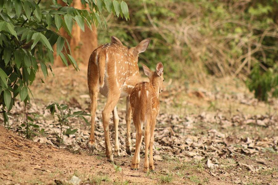 Nagarhole National Park - Coorg Hill Station