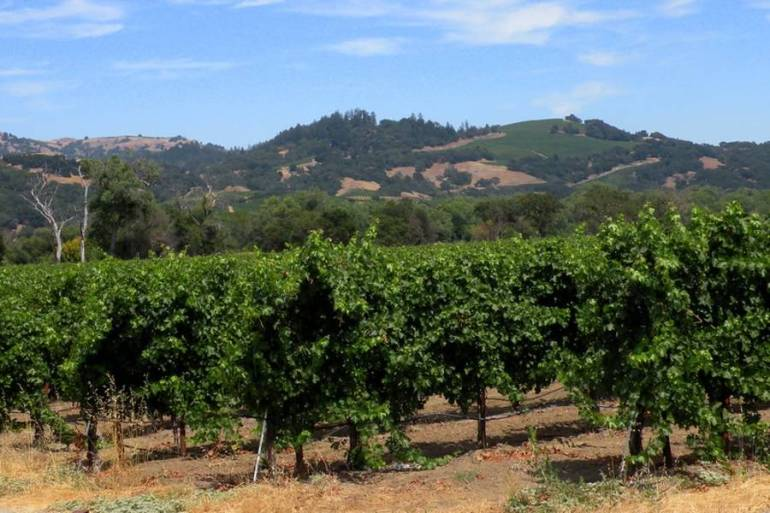 Napa Valley - Fascinating outdoor places in California