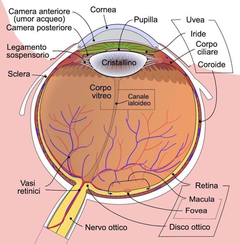 Nevo coroideale e melanoma della coroide