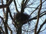 Van welke vogel is zo'n reusachtig nest?