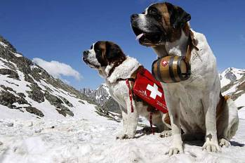 20170117switzerland_saint_bernard_d