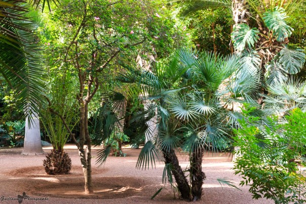 Marrakech - Jardin Majorelle