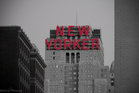 The New-Yorker - New-York
