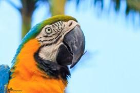 nature_Guadeloupe-2019-119
