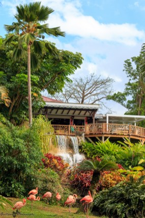 nature_Guadeloupe-2019-123