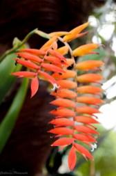 nature_Guadeloupe-2019-129