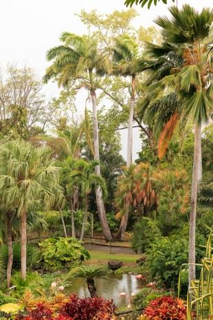 nature_Guadeloupe-2019-64