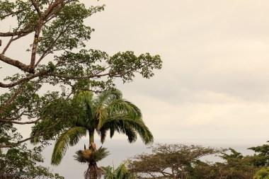 nature_Guadeloupe-2019-65