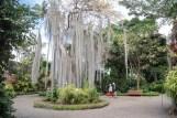 Jardín de aclimatación de la Orotava, con numerosas expecies exóticas.