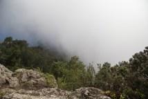 Laurisilva - nubes empujadas por los alisios.