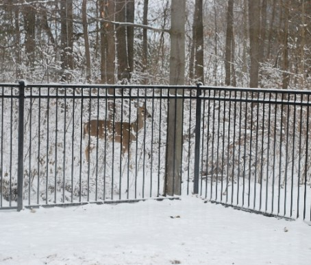 Look what was outside Nana's window!  Bambi!