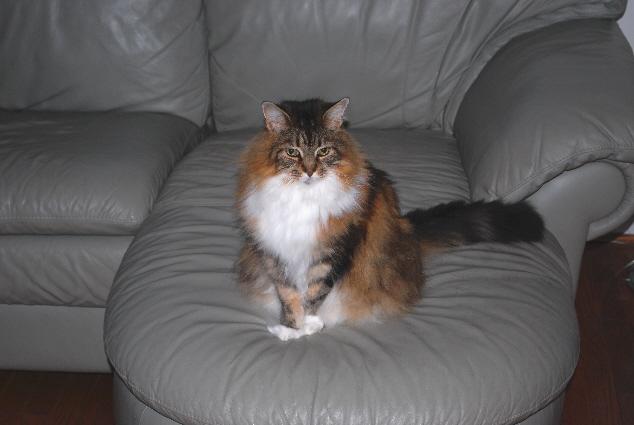 Kozy Kat.... or Kozette