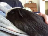 Humphrey cuddling mummy