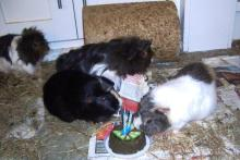 Hector, Vic and the birthday cake