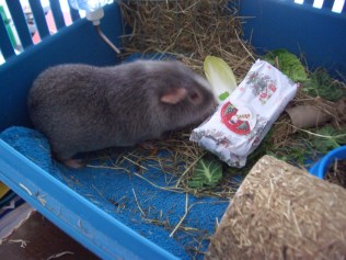 Midge checks his present out