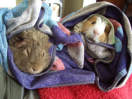 Colman and Kevin wrapped up after a bath