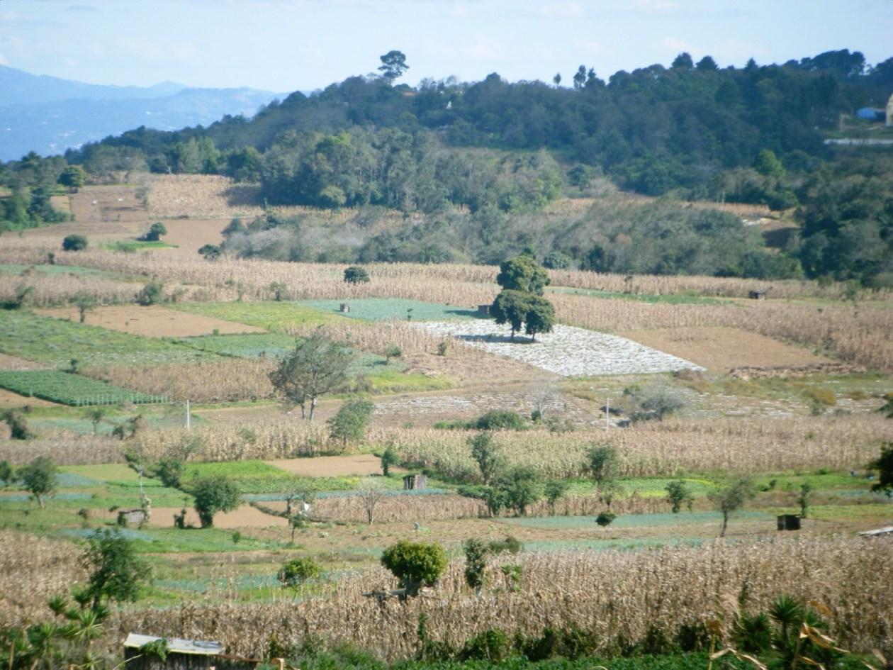 Dichosos hombres de maíz, que viven en las montañas….