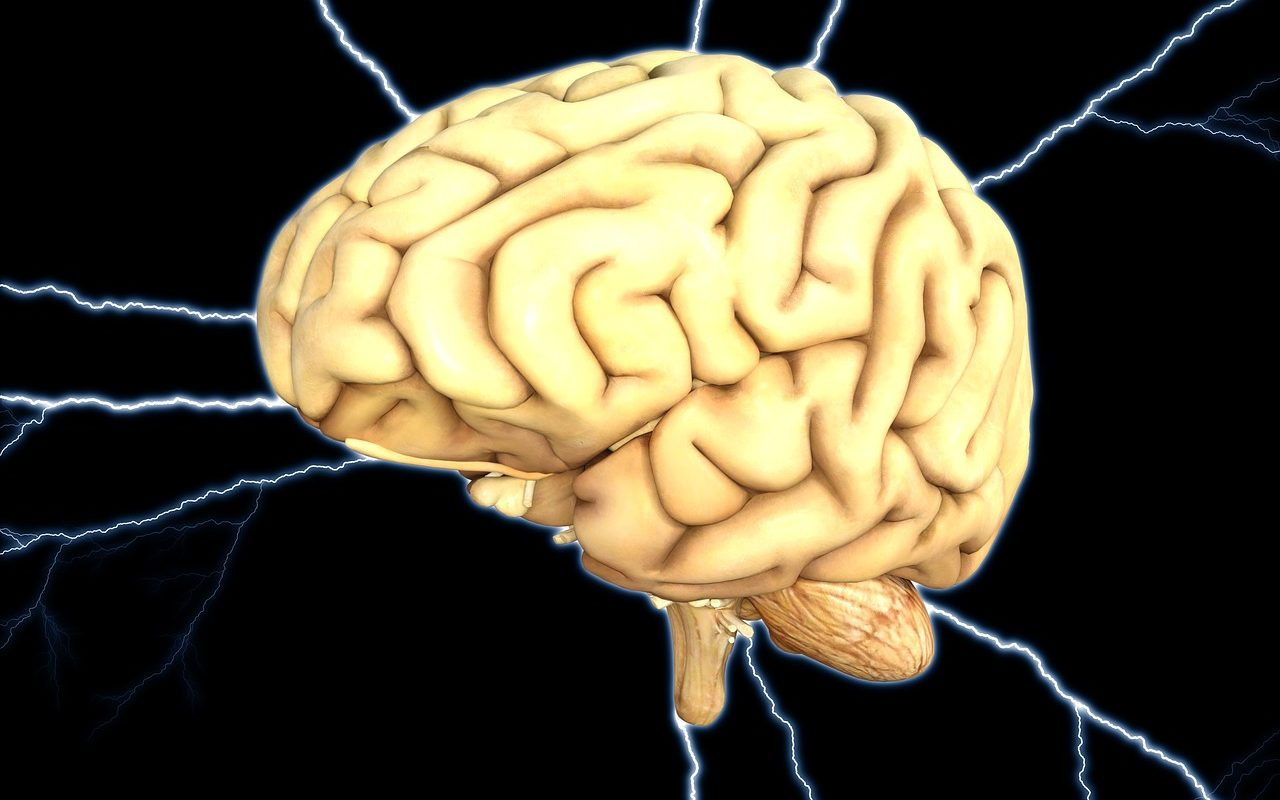 IQが高い脳