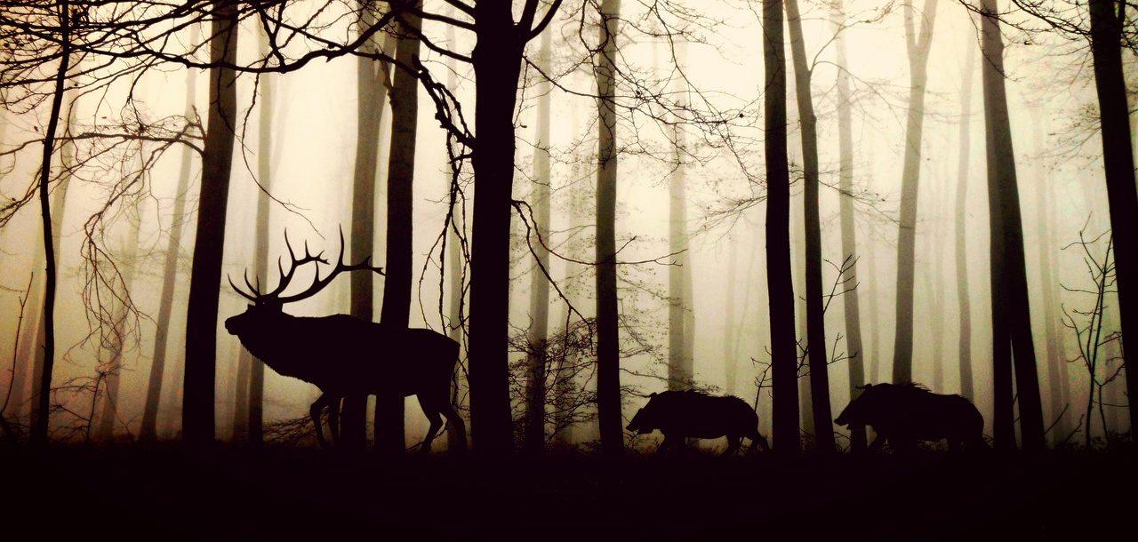 森を歩くもののけ