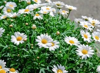 gambar-bunga-cantik