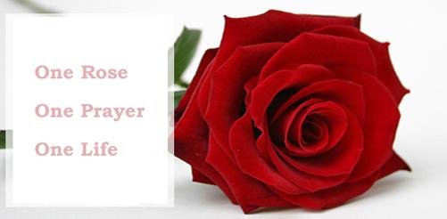 एक गुलाब (One Rose)