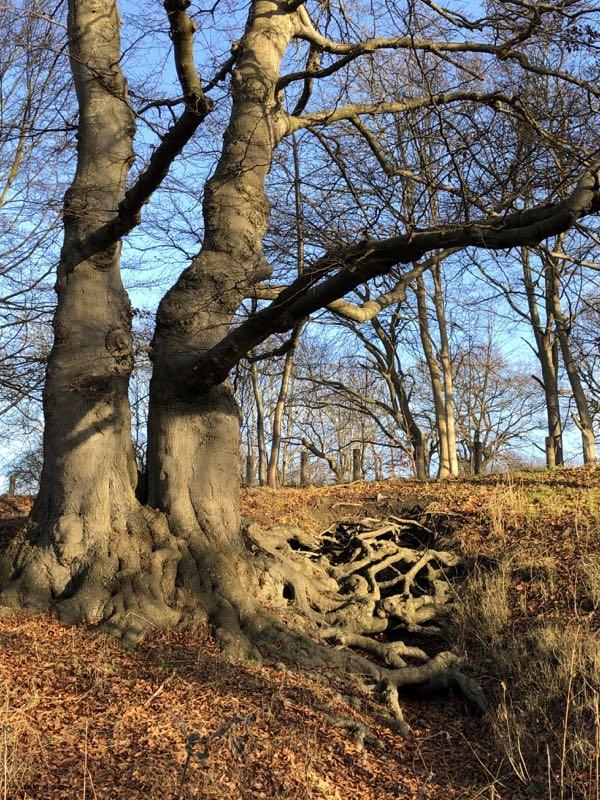 skov i Frederiksdal