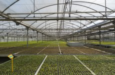 Bahrain's Investcorp acquires majority stake in Spain's Agromillora