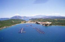 Abu Dhabi's Mubadala, Amerra Capital to buy stakes in Greek fish farms
