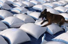 Dubai Customs seize massive drug haul using sniffer dogs