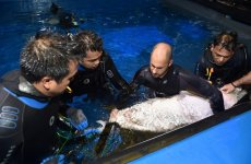 Dubai Aquarium introduces shark breeding programme, new visitor experiences