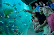 SeaWorld eyes Saudi theme park