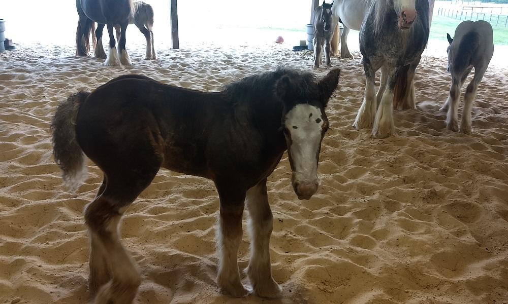 Feeding Foals