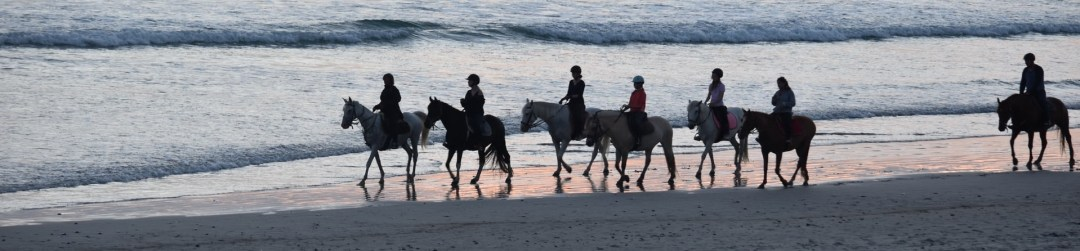 Gulf Coast Equine Veterinary Services Sarasota FL