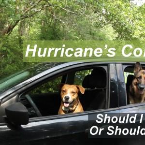 prepping pets for hurricane season