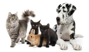 pets relocation services