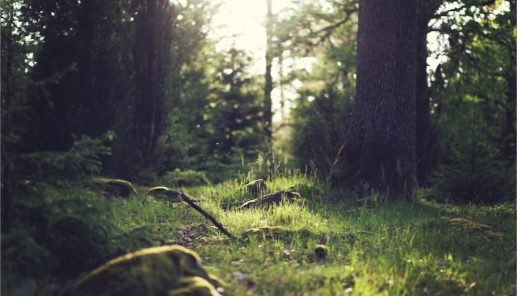 forest-ground