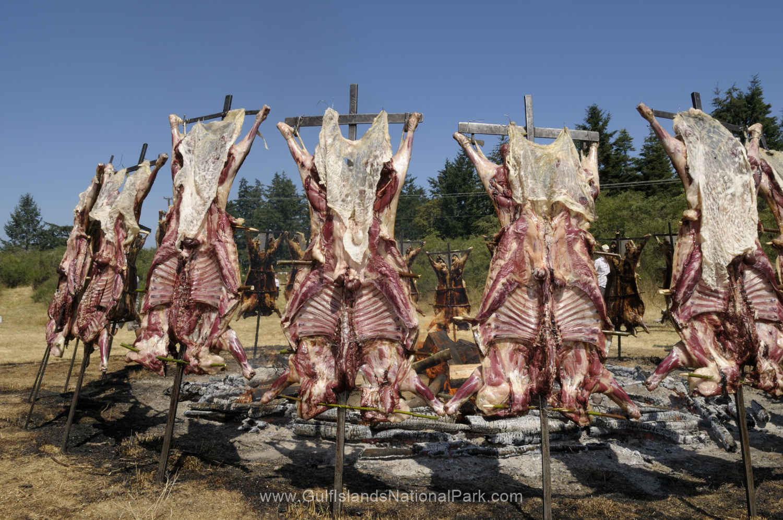 Saturna Lamb BBQ at Winter Cove