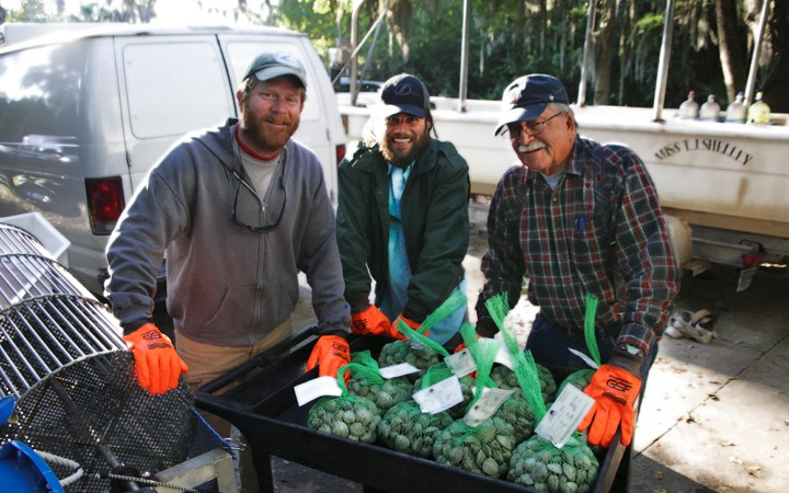Aquaculture Braintrust Farms Clams in Florida's Tampa Bay