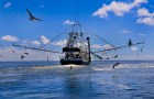 Coastal Acadiana Seafood Supply Chain Study Reveals Obstacles and Opportunities