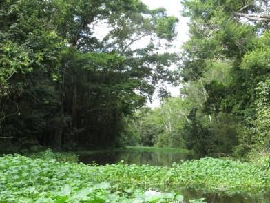 Uppströms Río Tapira.