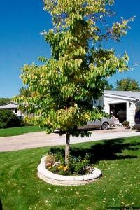 Town Council Authorizes 2015 Boulevard Tree Replacement Program Government GULL LAKE Town Beautification  Town Council Environment Community