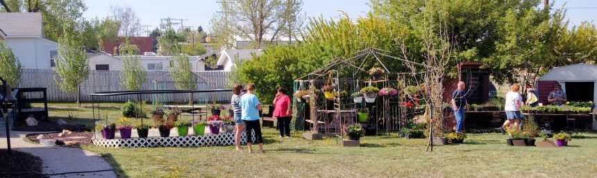 ANNUAL BEDDING PLANTS SALE AT THE GULL LAKE MUSEUM GULL LAKE Tourism  Tourism Committee Gull Lake Museum