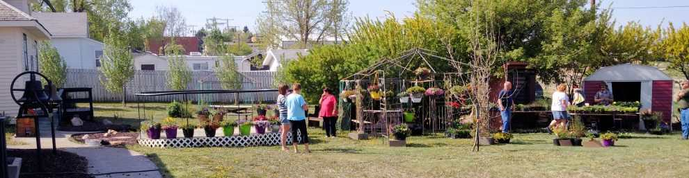 ANNUAL BEDDING PLANTS SALE AT THE GULL LAKE MUSEUM GULL LAKE Tourism  Tourism Committee Gull Lake Museum Community