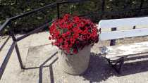 Cast Your Vote for Best Business Flower Pot Business GULL LAKE Town Beautification  Communities in Bloom